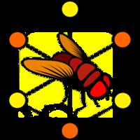 Fruit Fly Brain Observatory